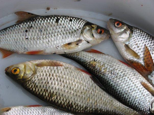 ищете работу чем заражена рыба в выборгском заливе авиакатастрофа произошла